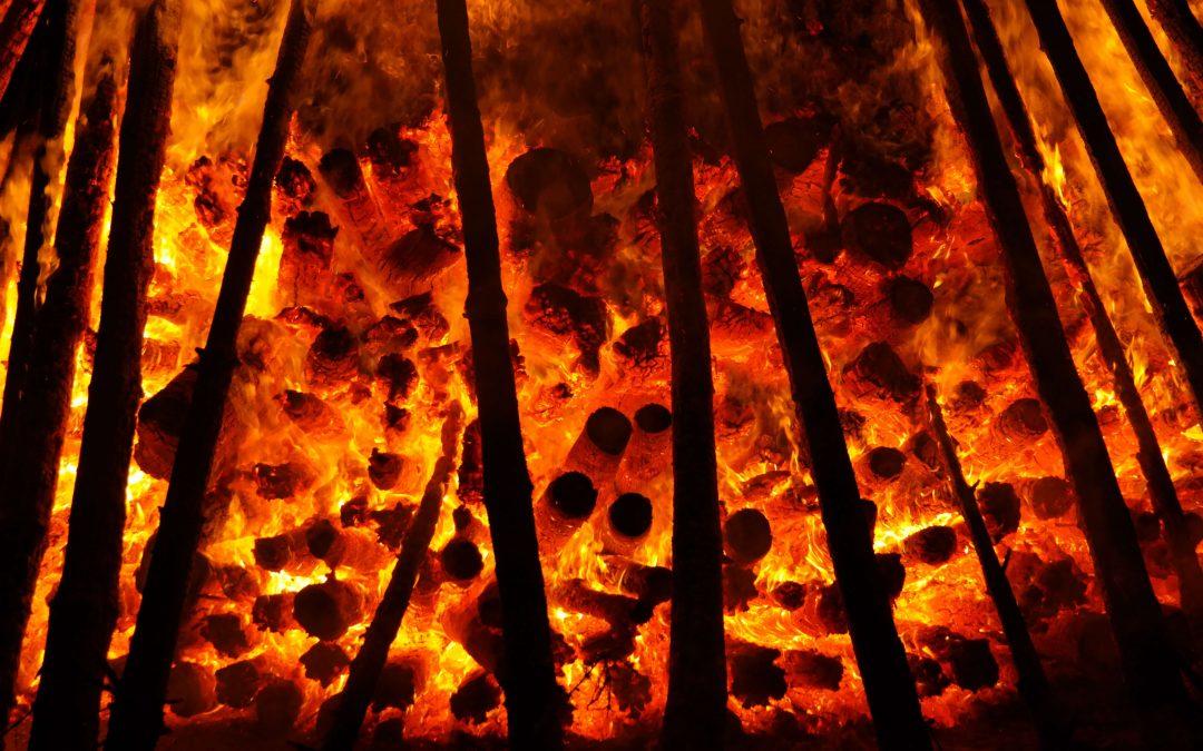 Stellungnahme zu den Waldbränden in Amazonien 2019