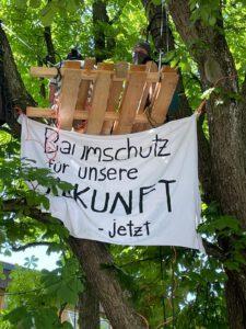Brauchen wir eine Baumschutzverordnung für die Stadt Günzburg?